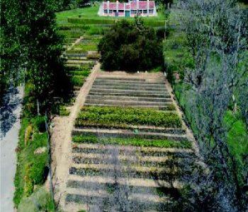 Botanical Garden Nursery