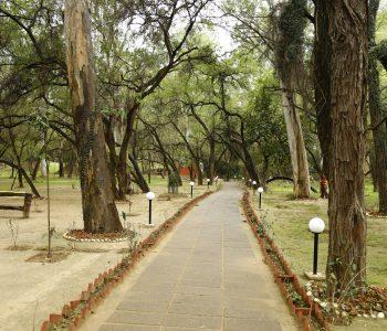 Nagar Van, City Forest