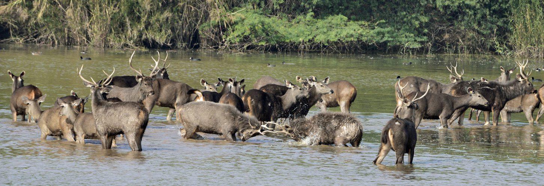 Preservation of Wildlife- ADD Future Vision